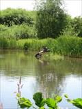 Image for Bird Nature Reserve, Severn Pond, Welshpool, Powys, Wales, UK