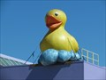Image for Duck on the roof - San Jose, California