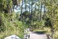 Image for Corkscrew Swamp Sanctuary - Naples, Florida