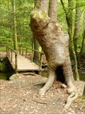 Image for Nature Trail Troll - Near Sugarland Vistor Center - Great Smoky Mountain, Tn.