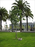 Image for Great White Cherry Plaque - San Francisco, CA