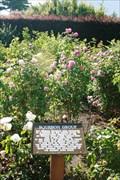 Image for Jessie Calder Memorial Garden — Invercargill, New Zealand