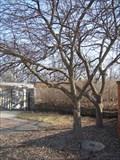 Image for Crabapples - Matthai Botanical Gardens - Ann Arbor, MI