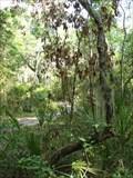 Image for Timucuan Preserve Trail Tree - Jacksonville, FL