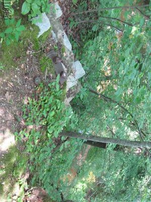 The Potomac Creek which the bridge once crossed can be seen through the leafy canopy.