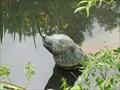 Image for Gaston the Sea Lion - Prague, Czech Republic