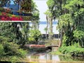 Image for Roses, Bougainvillea and Cypress Trees - Winter Haven, FL