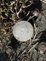 Image for Baylands Bart Control Disk