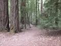 Image for Shadowbrook Trail  - Big Basin Redwoods Park - Boulder Creek, CA