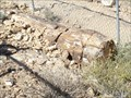 Image for Petrified Log - Overton, NV