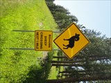 Image for Bighorn Sheep Crossing - Highway 385, South Dakota