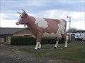 """Image for The """"BIG"""" Cow"""