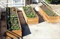 Image for The Dels Garden - Berkeley, CA