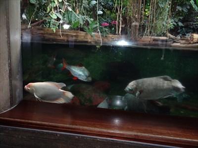 Nicht wirklich superschön, aber im Aquarium aufgenommen.