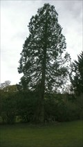 Image for Esthwaite Lodge Redwood tree, Hawkshead, Cumbria
