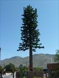 Image for Pine Tree Tower - Albuquerque, New Mexico