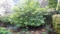 Image for Doreen Morgan Tree - Park Road Gardens, Grange-over-sands, Cumbria