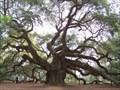 Image for Angel Oak