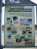 Image for Birdwatching at Antelope Island State Park, Utah