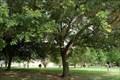 Image for Multiple Dedicated Tree - Donaldsonville, LA
