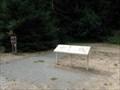 Image for Drury-Chaney Loop Trailhead - Humboldt Redwoods SP - California