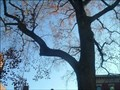 Image for Louisville, KY -an urban trail tree