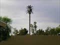 Image for West Bar 4 Pseudopalm - Gilbert, AZ