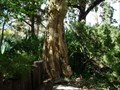 Image for Petrified Tree Trunk - OKC Zoo - Oklahoma City, OK