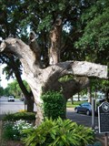 Image for District Court Tree - Columbus, TX
