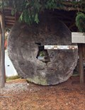 Image for Douglas-fir - Sooke Region Museum - Sooke, British Columbia, Canada