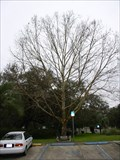 Image for Keystone Heights Public Library Moon Tree - Keystone Heights, FL