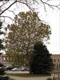 Image for Putman County Moon Tree - Unionville, Missouri