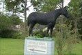 Image for Nicholls State University Farm Horse - Thibodaux, LA