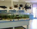 Image for UTPA Coastal Studies Lab - South Padre Island, TX