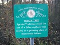 Image for Treaty Tree - Indian Mills (Vincentown), NJ