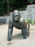 Image for Phil the Gorilla