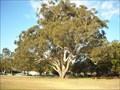 Image for Blackbutt, Recreation Reserve, Nowra