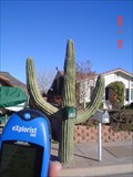 Image for The BIG Cactus Mailbox