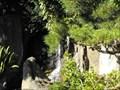 Image for Japanese Garden waterfall - San Mateo, California