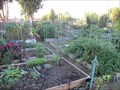 Image for Edith Morley Community Garden - Campbell, CA