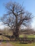 Image for Jacobite Rebel Tree - Clifton, Cumbria UK