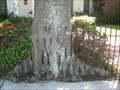 Image for Fence Eating Tree in New Orleans, LA