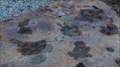 Image for Ornithopod Dinosaur footprints -- Albuquerque NM