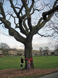 Image for Shakespeare's Oak - Kendal Green, Cumbria UK