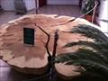 Image for Redwood Tree Ring Display - Kerzers, FR, Switzerland