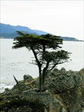 Image for The Lone Cypress - Pebble Beach, California