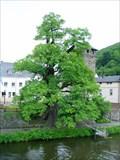 Image for Alte Eiche von Dausenau, Germany