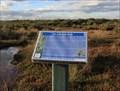 Image for Warringine Park, Hastings, Victoria, Australia-Saltmarshs