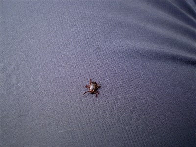 ticks will be after your blood!