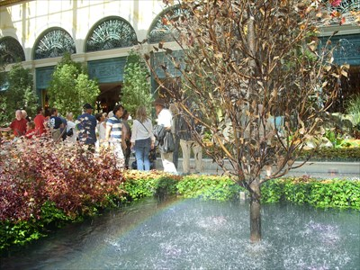 Inside The Conservatory at the Bellagio.